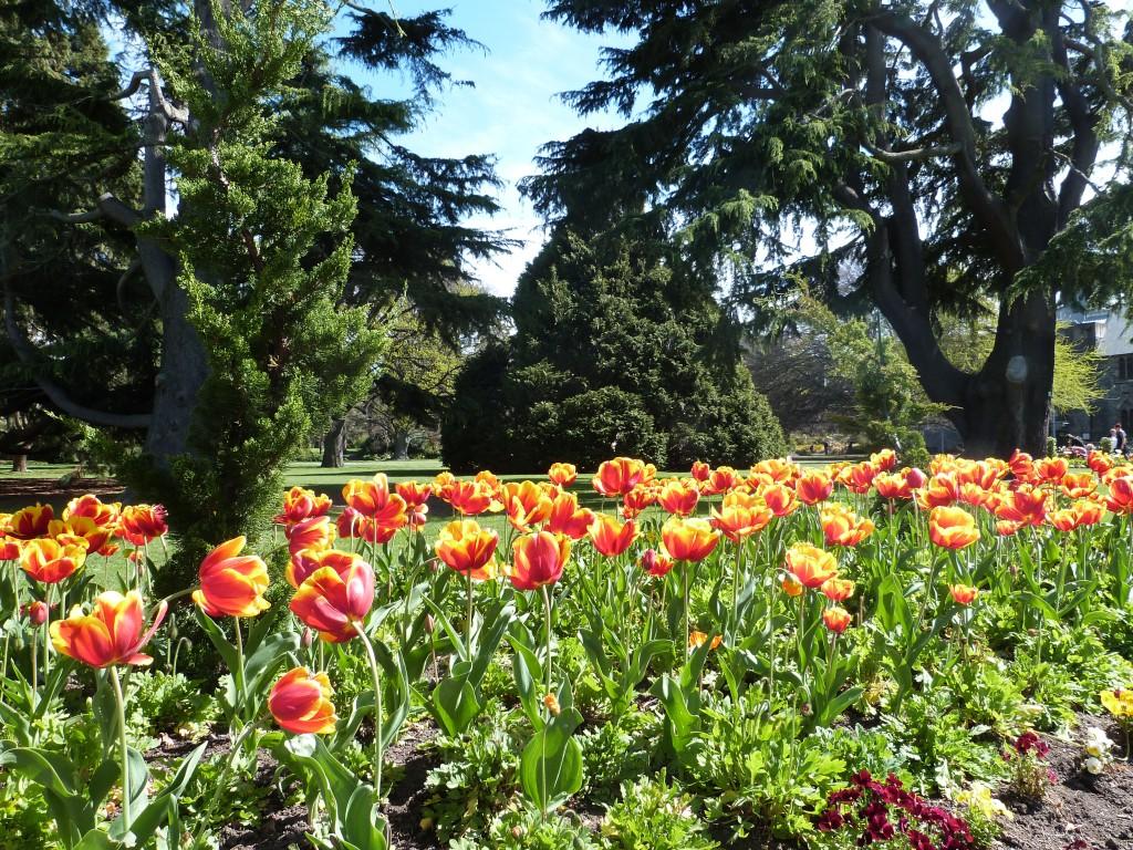 CC Botantic Gardens